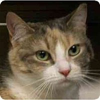 Adopt A Pet :: River Bank - Lombard, IL