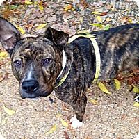 Adopt A Pet :: Bunny - Irving, TX