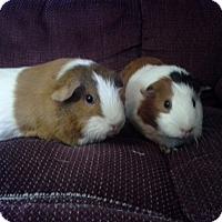 Adopt A Pet :: Lacy & Lucy - San Antonio, TX