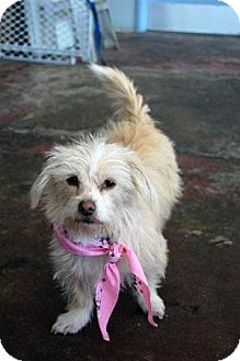 Terrier (Unknown Type, Medium) Mix Dog for adoption in Studio City, California - Daisy Mae