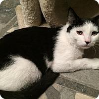 Adopt A Pet :: Robin - Raritan, NJ