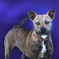 Adopt A Pet :: Carly - Toluca Lake, CA