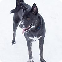 Adopt A Pet :: Clea, Courtesy Listing - Toms River, NJ