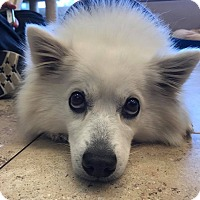Adopt A Pet :: Abby - Virginia Beach, VA