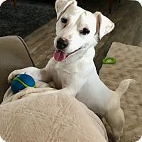 Adopt A Pet :: Miss Preston in Dallas - Austin, TX