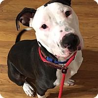Adopt A Pet :: Gulliver - Dayton, OH