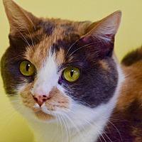 Adopt A Pet :: Bo - Des Moines, IA