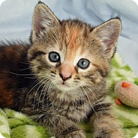 Adopt A Pet :: Maddie - Greenfield, IN