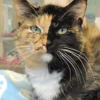 Adopt A Pet :: Violet - Westville, IN
