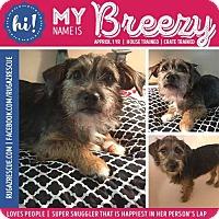 Adopt A Pet :: Breezy - New Port Richey, FL