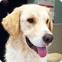 Adopt A Pet :: Moses - BIRMINGHAM, AL
