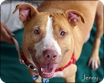 American Pit Bull Terrier Mix Dog for adoption in Vista, California - Jenny