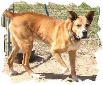 Alaskan Malamute Mix Dog for adoption in Peconic, New York - Riggs