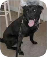 Labrador Retriever Mix Dog for adoption in Warren, New Jersey - Bart