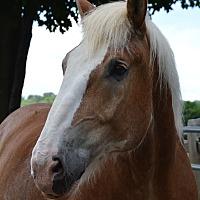 Adopt A Pet :: Bronson - Washington, CT