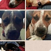 Adopt A Pet :: Madea - Donaldsonville, LA