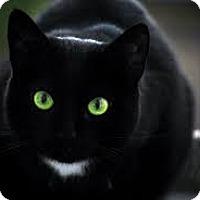 Adopt A Pet :: Jasmine - Whitestone, NY