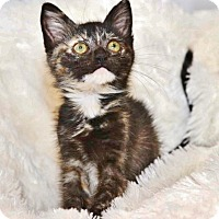 Adopt A Pet :: Twinkie - Davis, CA
