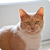 Adopt A Pet :: Polly - Byron Center, MI