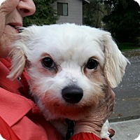 Adopt A Pet :: Agnes - Salem, OR