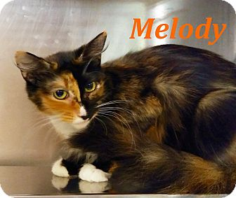 Domestic Mediumhair Cat for adoption in El Cajon, California - Melody
