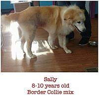Adopt A Pet :: Sally - Trenton, NJ