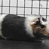 Adopt A Pet :: *Urgent* Tippy - Fullerton, CA