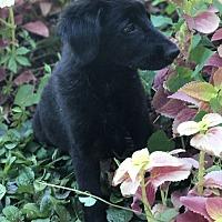 Adopt A Pet :: Stacy - Mesquite, TX