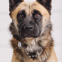 Adopt A Pet :: Lancelot - Portland, OR