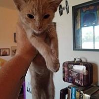 Adopt A Pet :: Sumter - San Tan Valley, AZ