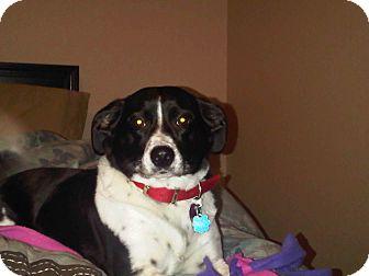 Border Collie/Terrier (Unknown Type, Medium) Mix Dog for adoption in Washington, D.C. - JoJo/ Urgent/ Reduced
