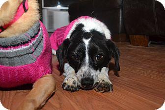 Border Collie Mix Dog for adoption in Marietta, Georgia - Molly