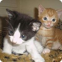Adopt A Pet :: Panda&Pumpkin - Laguna Woods, CA