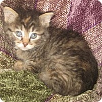 Adopt A Pet :: Loretta - Dallas, TX