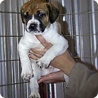Adopt A Pet :: Fred - Spring City, PA