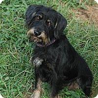 Adopt A Pet :: Reese - Harrisburgh, PA
