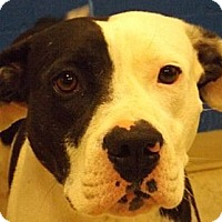 Adopt A Pet :: Annabelle - Bloomsburg, PA