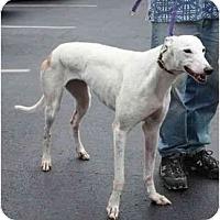 Adopt A Pet :: Sarah - Louisville, KY