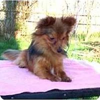 Adopt A Pet :: Rusty - Dayton, OH