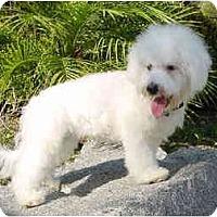 Adopt A Pet :: Prancer - La Costa, CA