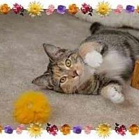 Adopt A Pet :: Little Ruthie - KANSAS, MO