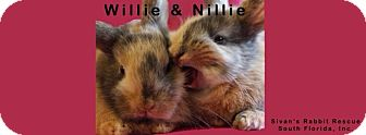 Harlequin for adoption in Boynton Beach, Florida - Willie and Nillie