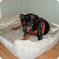 Adopt A Pet :: Maurice - Malaga, NJ