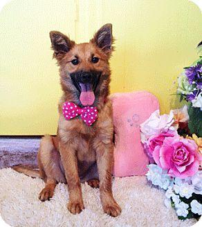 Labrador Retriever/Shepherd (Unknown Type) Mix Dog for adoption in Castro Valley, California - Gem