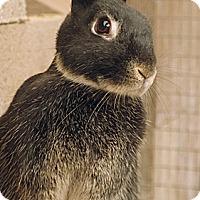 Adopt A Pet :: Negrita - Santa Barbara, CA