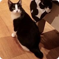 Adopt A Pet :: Everest-Adoption Pending! - Colmar, PA
