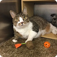 Adopt A Pet :: Emmy - Colmar, PA