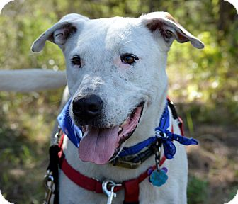 Terrier (Unknown Type, Medium)/Shepherd (Unknown Type) Mix Dog for adoption in Wimberley, Texas - Beaux