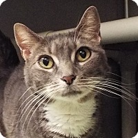 Adopt A Pet :: Abby - Grants Pass, OR