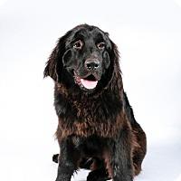 Adopt A Pet :: Noonan - St. Louis Park, MN